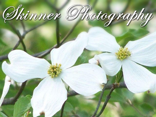 Skinner Photography