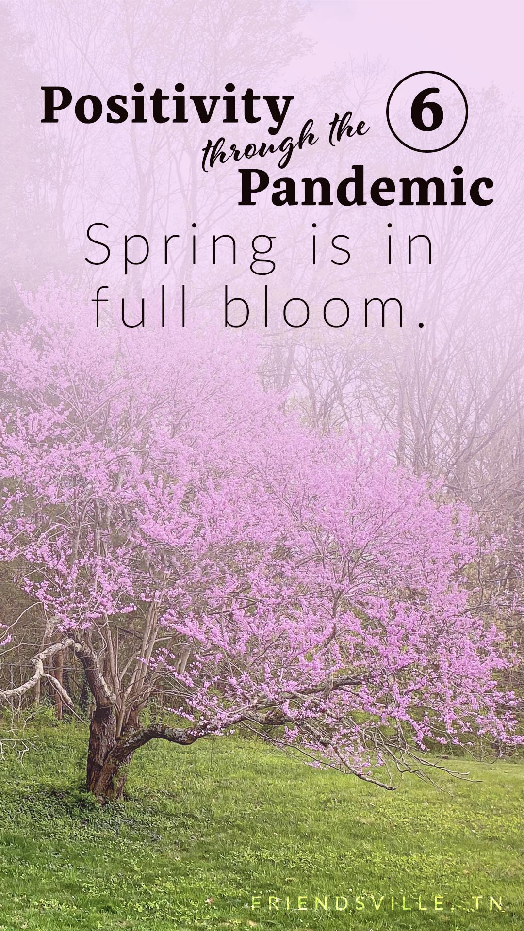 Positivity through the Pandemic #6: Spring is in full bloom