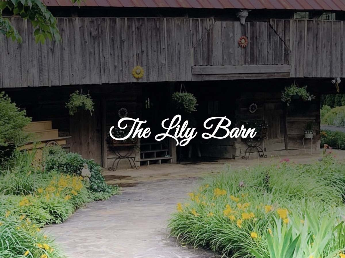 The Lily Barn Logo
